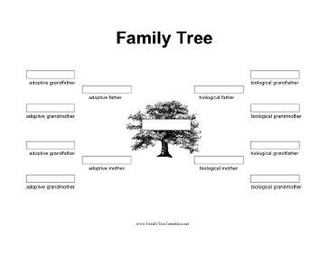 Family Tree with Biological and Adoptive Parents Template